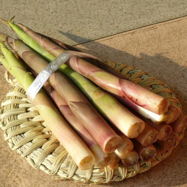 山菜 タケノコ 根曲り竹 大小混合500g前後 朝取り 天然物(5/半ば~6月)
