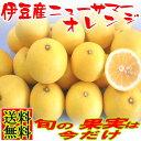 【季節限定】偶然の産物♪伊豆産ニューサマーオレンジを産地直送!爽やか&ジューシーな果実 オ...