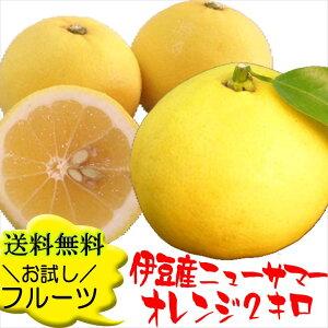 【季節限定】柑橘系の果物の偶然の産物♪爽やか&ジューシーな伊豆産ニューサマーオレンジを産...