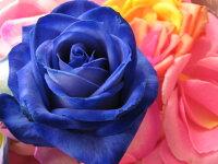 青バラ100本花束