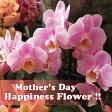 母の日 プレゼント 胡蝶蘭 鉢植え ◆母の日ギフト 花鉢 かわいい胡蝶蘭 花言葉は幸福が飛んでくる♪