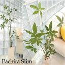 ■送料無料 観葉植物 インテリア 大型 【高さ120センチパキラスリム...