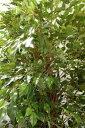 【観葉植物 大型】■高さ210cmフィカスツリー■観葉植物 造花 タヒチ 南国 夏 観葉植物 大型 インテリア 人工 フェイク 模様替え おしゃれ モダン シンプル 店舗 ディスプレイ カフェ インダストリアル 倉庫 レンガ 3