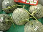 送料無料 訳あり 北海道追分産農協共選追分アサヒメロン糖度14度以上 優、良品 3〜6玉入り 8kg元箱