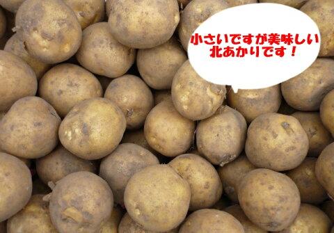送料無料(一部地域を除きます)北海道産越冬じゃが芋はじまりました! 業務用 家庭用北あかりSサイズ 20kg