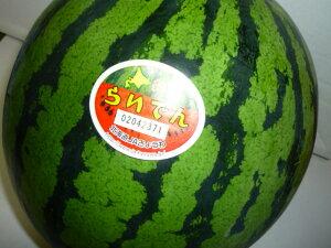 送料無料 北海道を代表するスイカ 北海道共和町産訳なしの秀品 らいでんすいか糖度11度以上 3Lサイズ以上で1玉当たり7kg以上