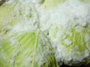 期間限定 北海道和寒産 甘くて美味しい 越冬熟成雪の下 きゃべつ 10kg(4〜8玉入り)