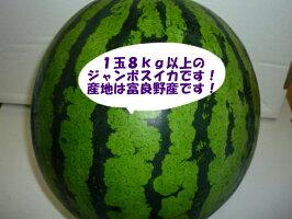 北海道特産らいでんすいか