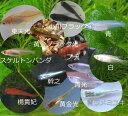 メダカ 12種セット(計50匹)・楊貴妃/小川ブラック/青ラ...