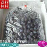 冷凍ブルーベリー(サイズふぞろい品)1kg【送料無料】国産!農薬不使用!加工用岩手県産【送料込み】02P03Sep16※沖縄・離島は送料無料の適用外です