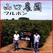 日本人が作ったブラジルコーヒー山口農園ブルボン500g送料無料!