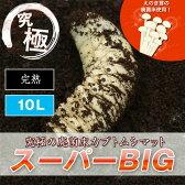 超高カロリー! 廃菌床 カブトムシ マット 「スーパーBIG」