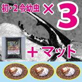 ヘラクレスオオカブト(ヘラクレスヘラクレス)初・2令幼虫3頭+超高カロリーカブトムシマットのセット♪