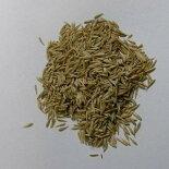 生牧草の種オーチャードグラス