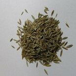 生牧草の種トールフェスク