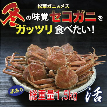 【送料無料】訳あり セコガニ(親ガニ )松葉ガニの雌 活 総重量1.5kg前後【かに/カニ/蟹】