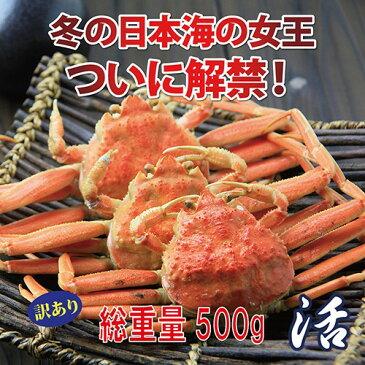 【送料無料】訳あり セコガニ(親ガニ )松葉ガニの雌 活 総重量500g前後【かに/カニ/蟹】