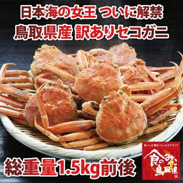 【送料無料】訳あり セコガニ(親ガニ )松葉ガニの雌【茹で】総重量1.5kg前後 【かに/カニ/蟹】