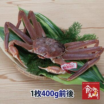 タグ付き松葉ガニ(活)小サイズ1枚400g前後 送料無料 (ずわい蟹 ずわいがに ズワイガニ かに カニ 蟹 生 松葉がに 姿 刺身)