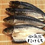 いわし干し4枚鮭の店【新潟たけうち】