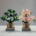桜橘 紅中(高さ30cm)