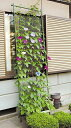 緑のカーテンで地球温暖化防止緑のカーテン(立掛けタイプ) 幅80cmX高さ2.4m