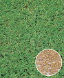 タキイ種苗 芝の種 野芝 TTSノシバ 1kg