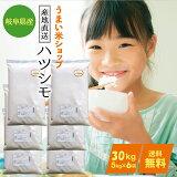 岐阜県産ハツシモお米30kg