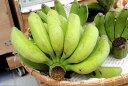 沖縄で生産した島バナナです!珍しいフルーツです沖縄・石垣島より直送♪約1kg 島バナナ・珍し...