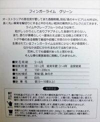 現品!【シマトネリコ・株立ち】人気常緑樹!◎送料込(本州四国)