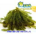 沖縄県産海ぶどう4袋セット(化粧箱なし)
