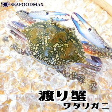 渡り蟹 ラウンド 1杯 約100g 【ワタリガニ/姿/かに/カニ】