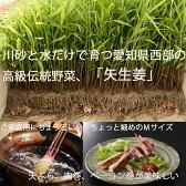 ☆伝統製法で作る色鮮やかで香り豊かな金時生姜の葉生姜☆『矢生姜M(30本入り)』★5袋以上ご購入の方には紀州南高梅の梅酢差し上げます。