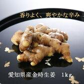 ピリッと辛い金時生姜。送料無料。TV「食彩の王国」でもご紹介愛知県から産地直送『金時根生姜(1kg)』香りがいいです!すりおろしたり、スライスしてどうぞ。生姜シロップにも。05P03Dec16