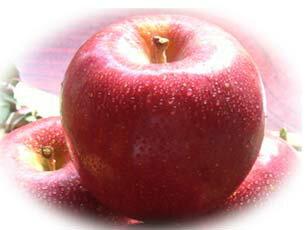 信州完熟りんご【贈答用】5k【お歳暮】【安曇野】【有機栽培】【究極の味】