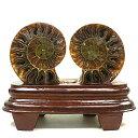 アンモナイト(化石)(スライス研磨・置物) 小さいサイズ 台座付き 97g マダ...