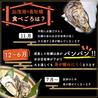 牡蠣食べごろ
