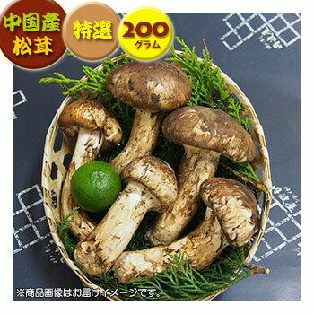 【中国産松茸】:特選松茸:約200g