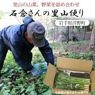 岩手県洋野町石倉さんの里山便り季節の山菜と野菜の詰め合わせ