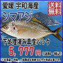 愛媛 ( シマアジ ) 1-1.5kg原体サイズ 刺身 煮魚 焼魚 干物 下処理済み 送料無料...