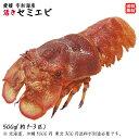 天然 ( セミエビ ) 1-3尾 約400-500g 幻の海老 浜から直送 送料無料
