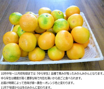 【送料無料】濃厚な味の温州みかん 10kg 和歌山産【ちょっとだけ訳あり・家庭用】とろける美味しさ!