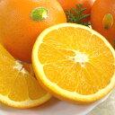 """【送料無料】和歌山産 高級ネーブルオレンジ""""果物の王様""""5.5kg 24〜27玉"""