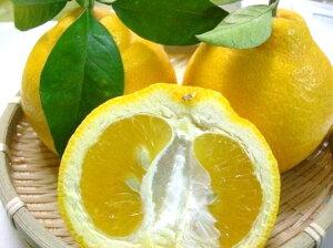 【送料無料】和歌山のめずらしい柑橘 三宝柑 【訳あり・家庭用】5kg 【osaka-送料無料0301】