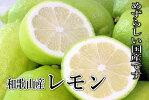 国産(和歌山産)グリーンレモン/レモン訳あり3kg【防腐剤不使用/ノーワックス】