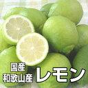 【送料無料】国産(和歌山産)グリーンレモン/...