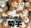 【送料無料】和歌山産菊芋(キクイモ)生3kg土付き【無農薬】テレビで話題のスーパーフード