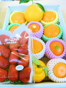 フルーツ 詰め合わせ