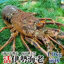 ギフト 長崎産天然活伊勢海老 特大サイズ 1.0kg前後1尾...