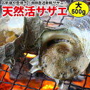長崎産天然サザエ 大サイズ 500g